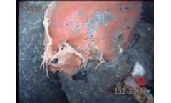 Anaconda Inspection of Plug - Video