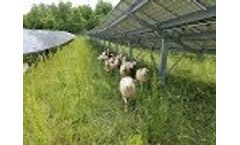 EnterSolar Photovoltaic System - Solar Grazing Video