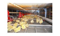 STRATA - Model CT-2569/201501 - Broiler Colony System
