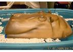 Pond Hippo - Pond Skimmer