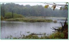 Wetland and Ecological Services