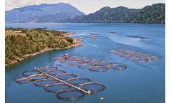 Chile Mandates Real-time Environmental Monitoring at Salmon Farms
