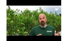 Testimonial: American Blueberry Farmer Increases Revenue By 33% With Lasers Video