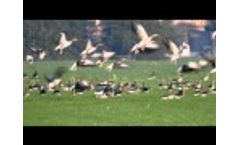 Bird Control Laser Repels Geese Video