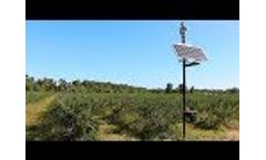 Laser Bird Deterrent At A Blueberry Farm - 99% Bird Reduction Video