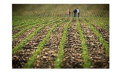 LibertyLink Gene - Soybeans
