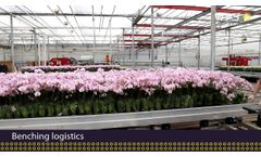Orchids Automation: for Every Phase the Best Solution - Video