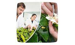 Plant Breeding Services