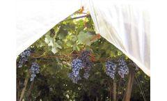 Idroland - Grape and Cherry Film Cover