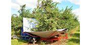 Fruit Harvester Machine with Umbrella