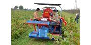 Raspberry Harvester