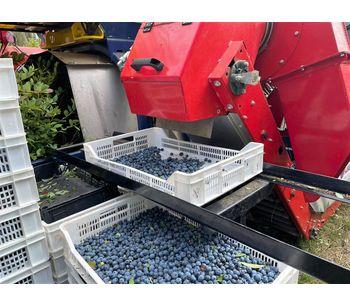 Blueberry Harvester -4