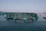 Ribola - Aquaculture Nets