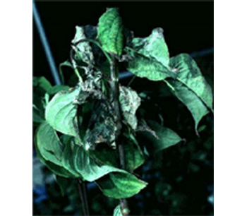 Results and Advice backed by Plant Pathologists Service