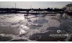 Sustainable vannamei Shrimp farming - Video