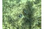 Shutter Fluorometer on Coral1 Video
