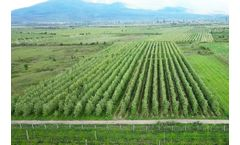 Micro-irrigation systems for tree crops