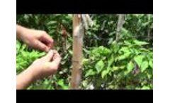 Binding Clip Video