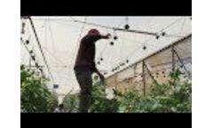 Paskal RollerHook - Lowering Cucumber plants- Los Pinos Video