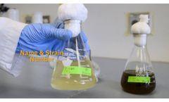 Sterile Algae Transfer With Minimal Equipment - Video