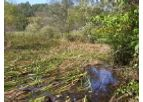 Wetlands Delineations and Assessments Services