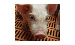 Opticon - Pig Cooling Systems