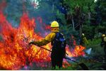Weather stations for wildfire applications - Forestry & Wood - Forestry