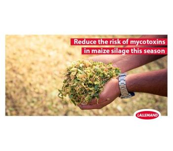Reduce the risk of mycotoxins in maize silage this season