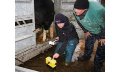 Bull Breeding Workshop