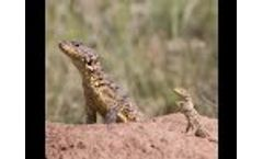Species Environmental Assessment Guidelines Webinar - Video