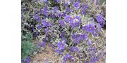 Summer Flowers - Southwest Plants