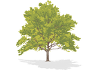 Chemically Dependent Trees Service