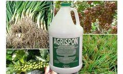 Agrispon - Biostimulant for Soil and Plants