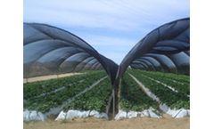 Shades & Greenhouse