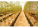 AgroMax - Pre-sprouted Seedlings