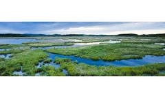 Wetland Delineation Services