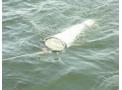 Plancton Net