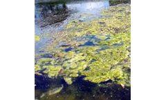 Bioremediate - Cyanobacteria