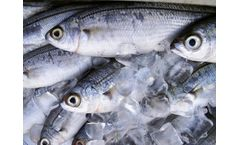 Wastewater treatment plants for the fish industry