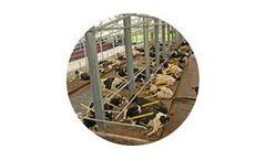 Mid Valley - Super-Comfort Dairy Cow Stalls