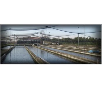 Azienda - Fishing Plants
