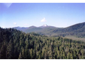 Forestland Appraisals and Consulting Services