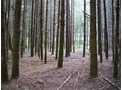 Timber Cruising and Forest Inventory Services