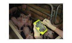 BIO-PIG - Pocket Software