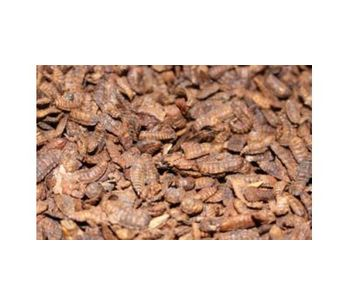 Whole Dried Insect Larvae Protein Feed Ingredients