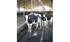 Rubber Mat Flooring for Cow Comfort