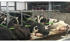 Cowcoon cubicles - Video