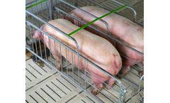 Gestation/Breeding Stall