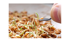 Seed Testing Services