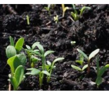 Healthy soils are paramount in the fight against climate change